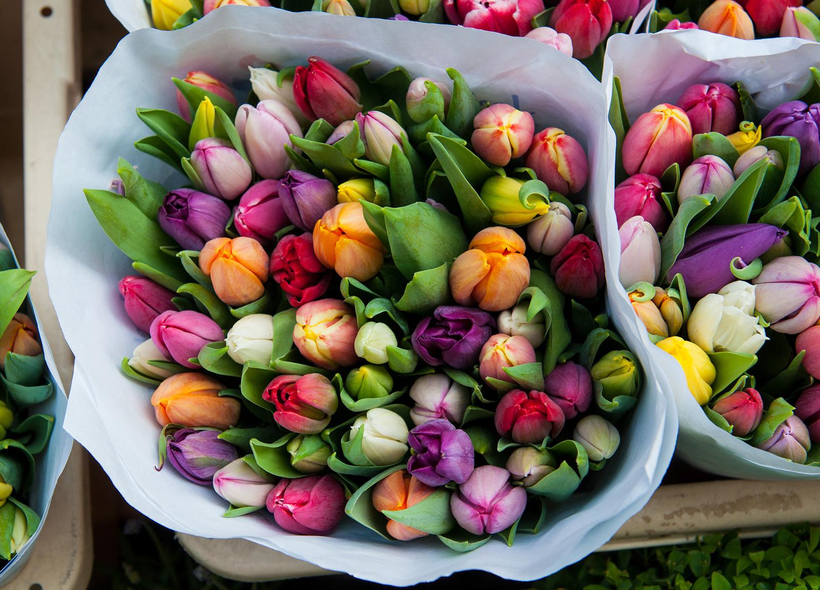 Amsterdam ist berühmt für: Tulpen.