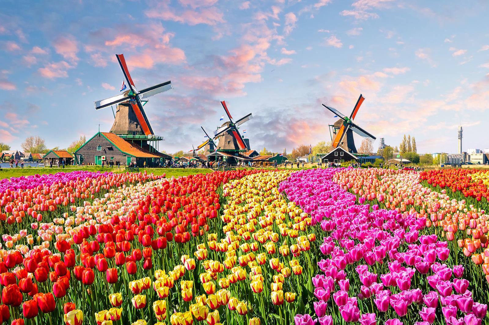 Keukenhof bei Amsterdam in Holland