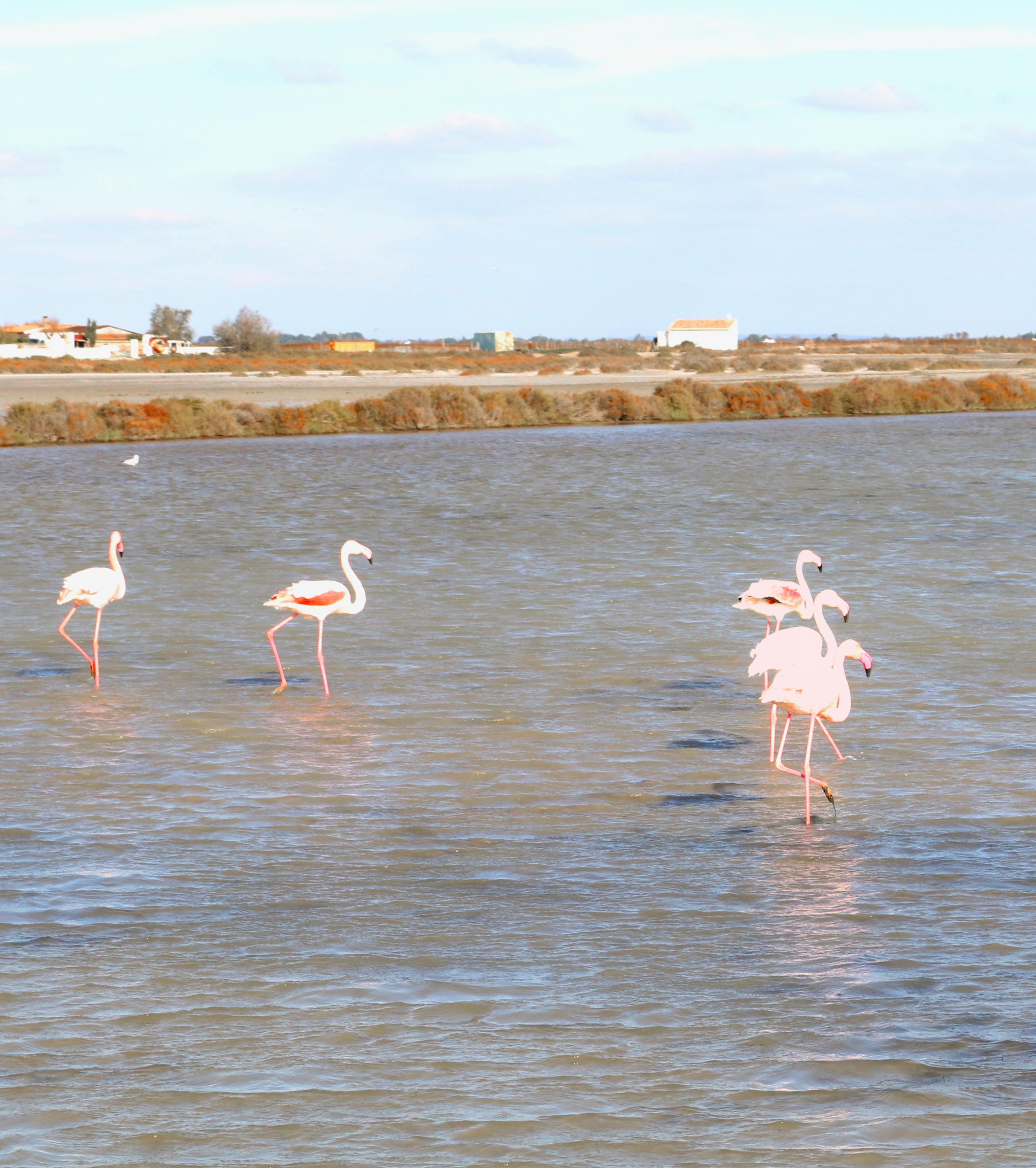 Beeindruckend: Flamingos in freier Wildbahn.