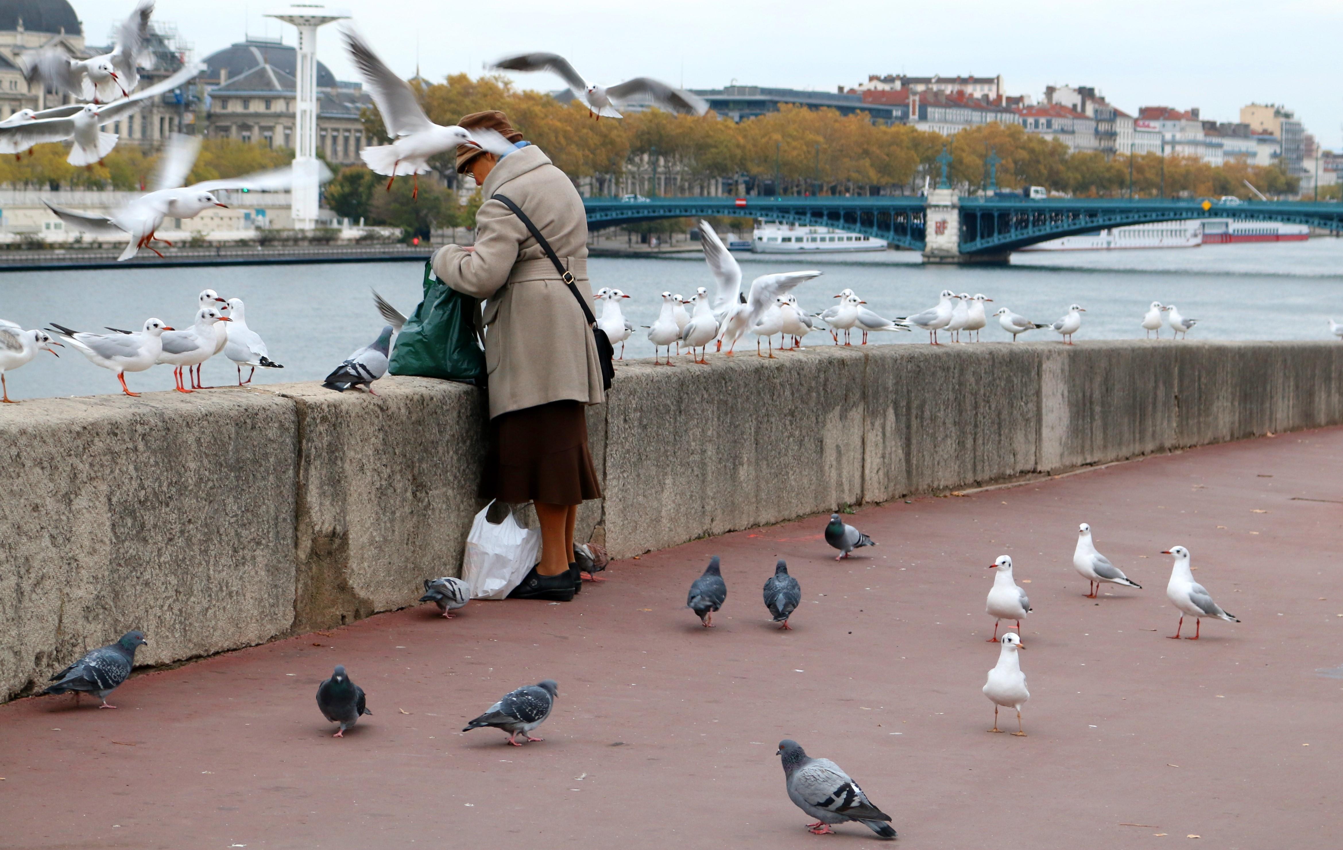 Eine Frau füttert die Möwen an der Rhône