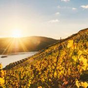Die Weinberge der Mosel bei einer Rhein-Kreuzfaht